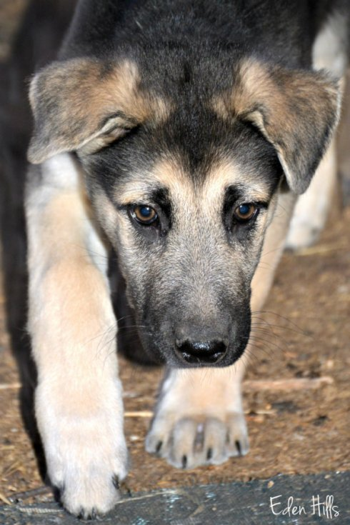 puppy-nose_1549ews