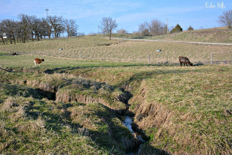 A pasture walk eden hills for Eden hill walk in