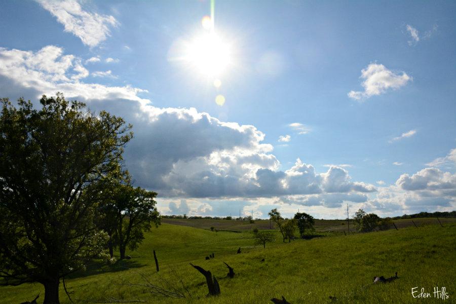Eastern meadowlark eden hills for Eden hill walk in